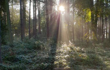 Forest School sun